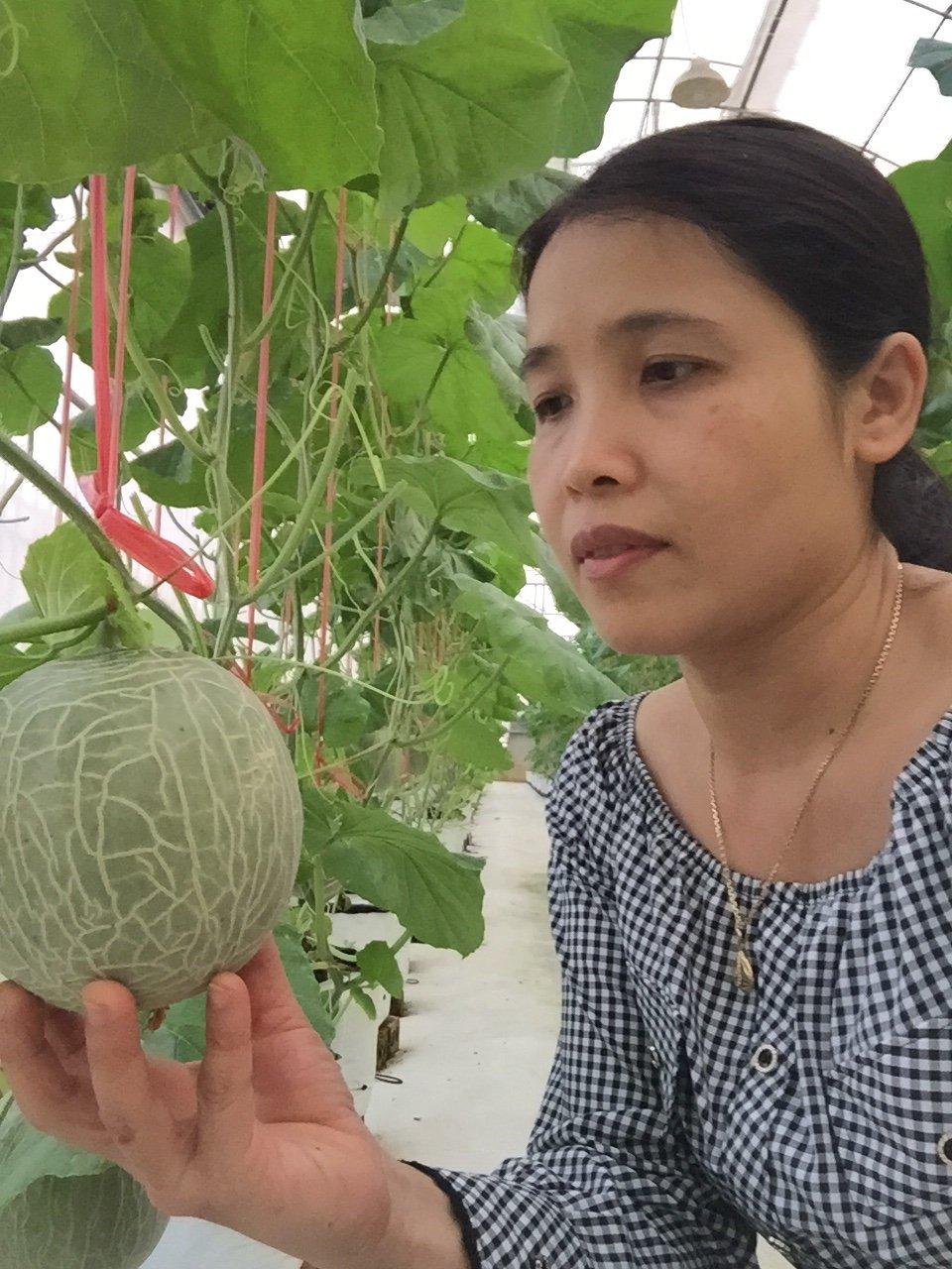 Vườn dưa lưới Hà Tĩnh khách đổ xô tham quan