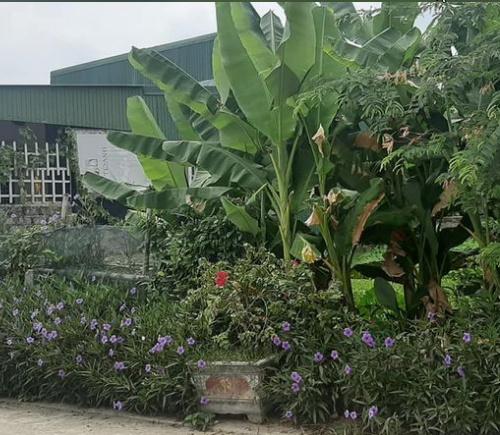 Bán đất xã Thạch Tân Hà Tĩnh 2